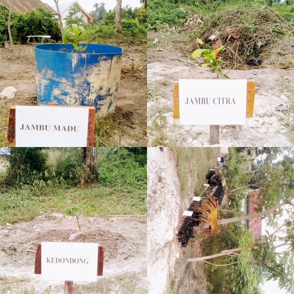 Memanfaatkan lahan yang tersedia disekitaran Mako Menwa. Kebun yang di tanami pohon buah-buahan.